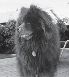 Photo of 13-year-old Chow Maggie