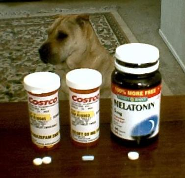 Best Dog Anxiety Medication Over The Counter